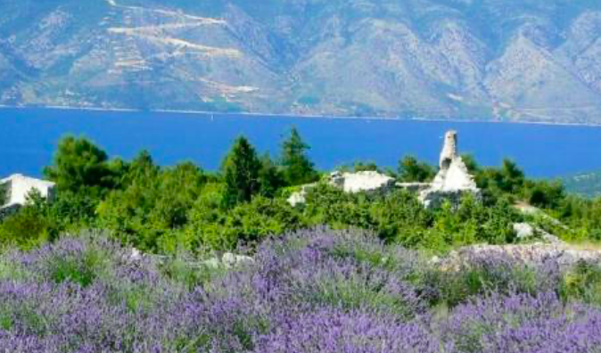Hvar Island Yoga Retreat Location Photos Lavender
